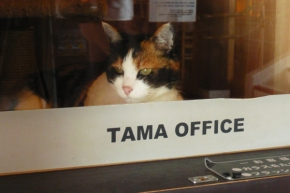 tama_chan_cat_office